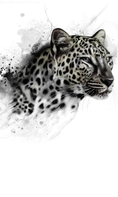 Wild leopard ,wide,wallpapers,images,pictute,photos