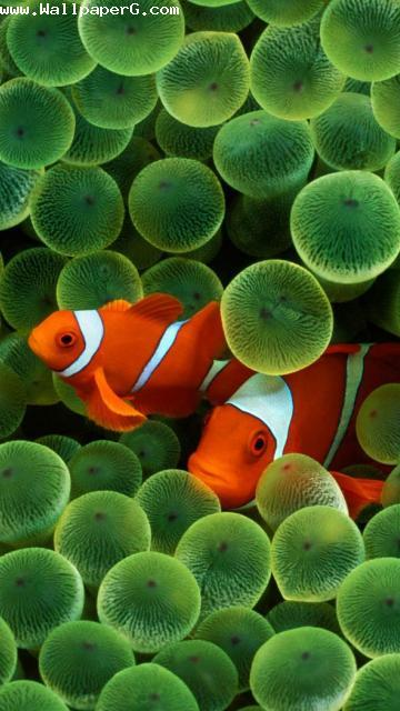 Under water fishes ,wide,wallpapers,images,pictute,photos
