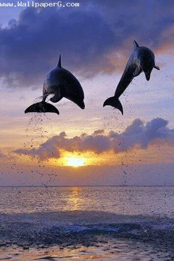 Dolphines ,wide,wallpapers,images,pictute,photos