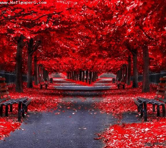 Download Empty Red Road 3d Hd Nature Wallpapers For Your Mobile