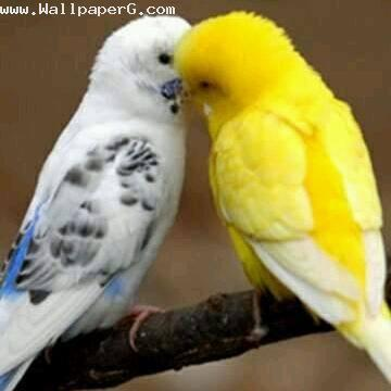 Bird natural love