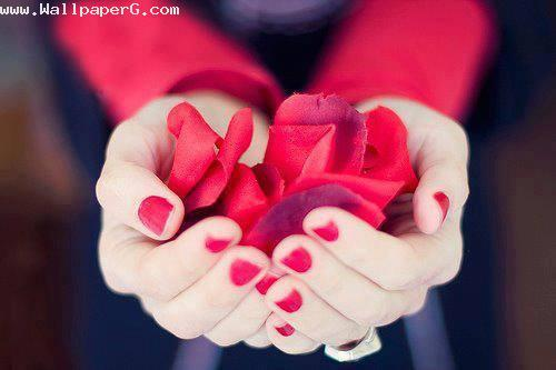 Roses for you ,wide,wallpapers,images,pictute,photos