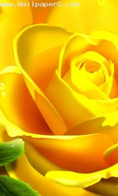 Yellow rose mark of frien