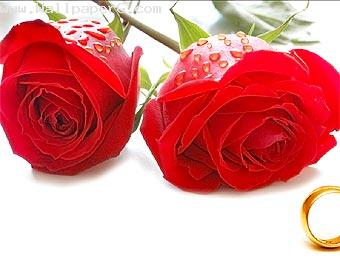 Red rose sign of beauty ,wide,wallpapers,images,pictute,photos