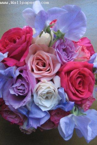 Collection of love rose
