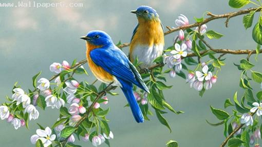 Beautiful birds ,wide,wallpapers,images,pictute,photos