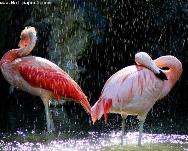 Bathing birds