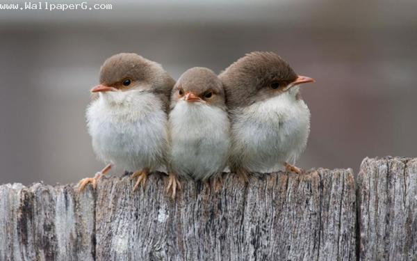 Cute birds ,wide,wallpapers,images,pictute,photos