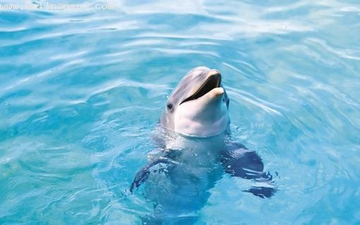 Cute dolphin ,wide,wallpapers,images,pictute,photos