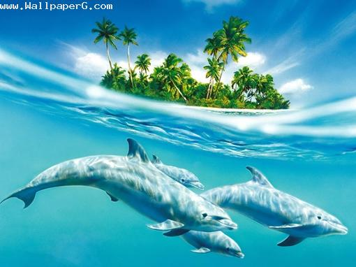 3 dolphin ,wide,wallpapers,images,pictute,photos