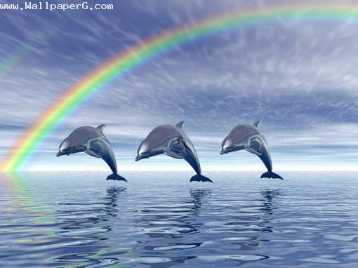 Dolphin and rainbows ,wide,wallpapers,images,pictute,photos