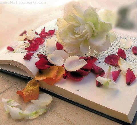 The book and flowers ,wide,wallpapers,images,pictute,photos