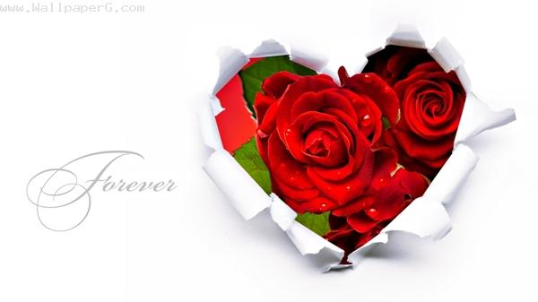 Heart rose ,wide,wallpapers,images,pictute,photos
