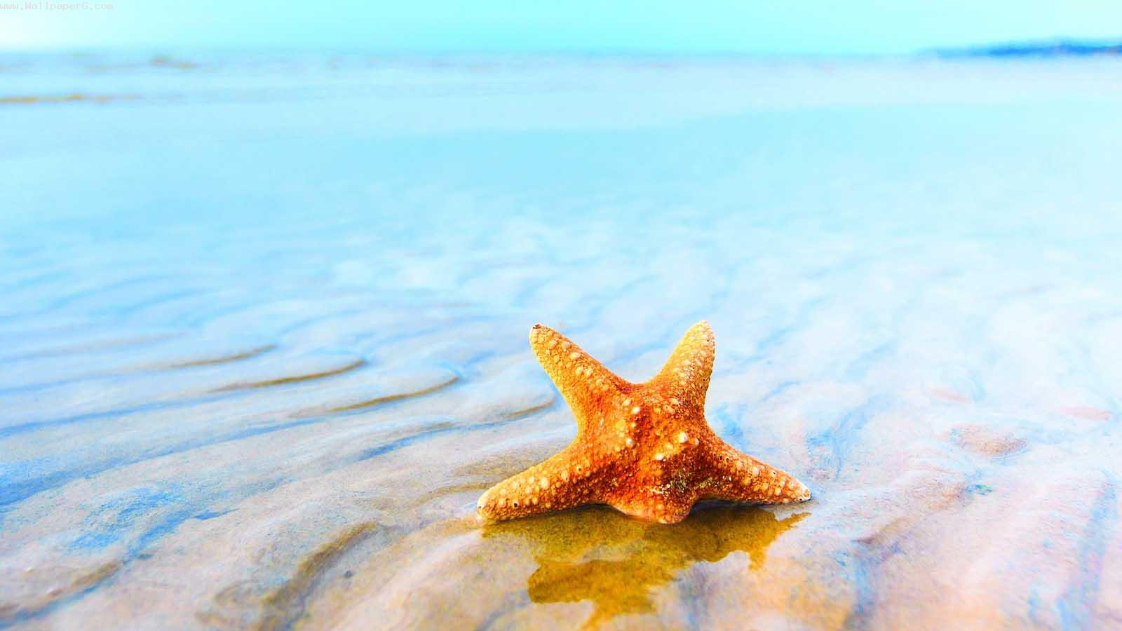 Star buried in sea