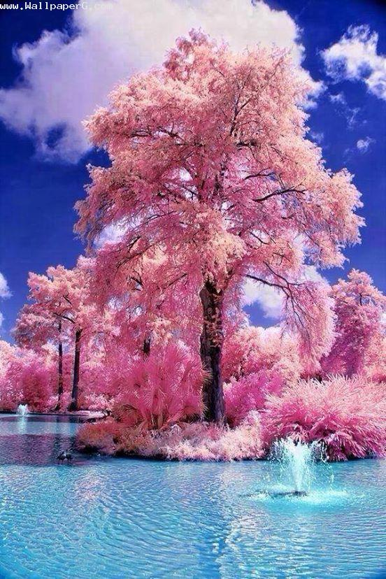 Pink tree in river