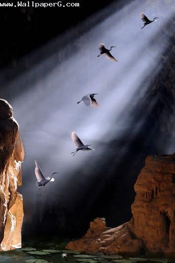 Flying birds in god s grace