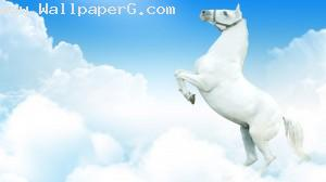 White horse ,wide,wallpapers,images,pictute,photos