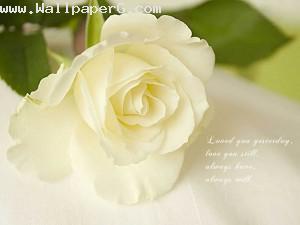 White flower 12