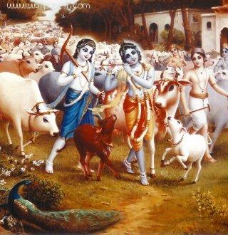 Krishna with cows ,wide,wallpapers,images,pictute,photos