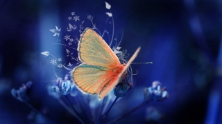 3d butterfly ,wide,wallpapers,images,pictute,photos
