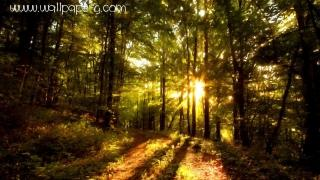 Beautiful forest paintings ,wide,wallpapers,images,pictute,photos