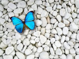 Blue butterfly on white stones ,wide,wallpapers,images,pictute,photos