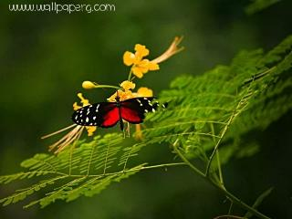 Butterfly wonder of natur