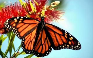 Butterfly(2) ,wide,wallpapers,images,pictute,photos