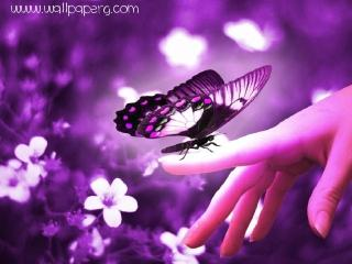 Awesome butterfly ,wide,wallpapers,images,pictute,photos