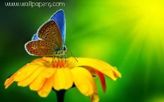 Butterfly(2)(1) ,wide,wallpapers,images,pictute,photos