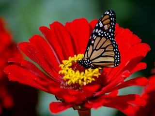 Butterfly on flowre