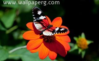 Macro butterfly 22 ,wallpapers,images,