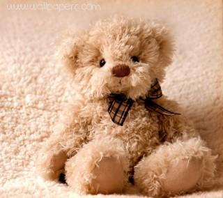 Cute teddy love of heart