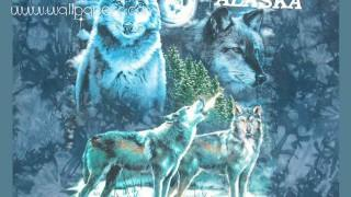 Blue wolf ,wide,wallpapers,images,pictute,photos