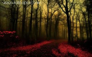 Dawn forest ,wide,wallpapers,images,pictute,photos