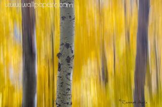 Fall abstract