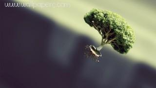 Flying tree ,wide,wallpapers,images,pictute,photos