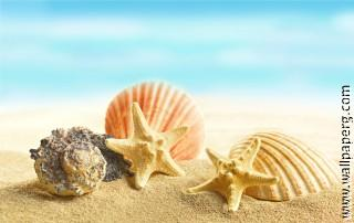 ?seashells?(2) ,wide,wallpapers,images,pictute,photos