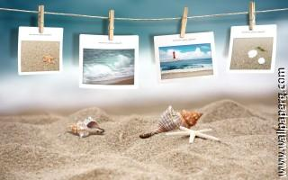 Photography seashells
