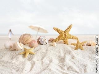 Seashells and starfish on the beach wallpaper