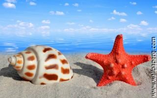 Seashells ,wide,wallpapers,images,pictute,photos
