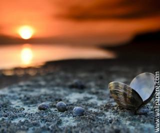 Shell on beach ,wide,wallpapers,images,pictute,photos
