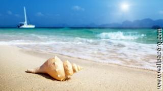 Shell on sand ,wide,wallpapers,images,pictute,photos