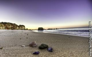 Shells on the beach ,wide,wallpapers,images,pictute,photos