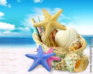 Shells and starfish ,wide,wallpapers,images,pictute,photos
