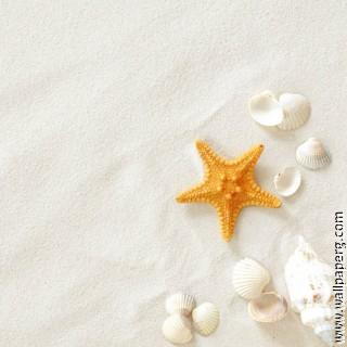 Beach shell ,wide,wallpapers,images,pictute,photos