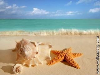 Beach starfish with shell