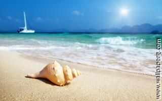 Beaches sand shells waves awesome wallpaper
