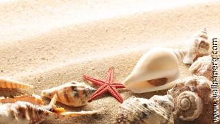 Random sea shell ,wide,wallpapers,images,pictute,photos