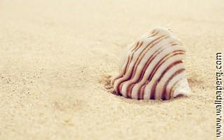 Shells and sea